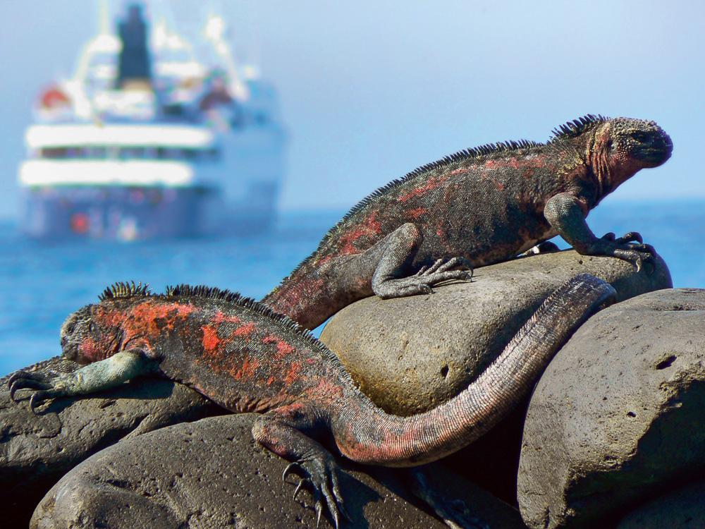 Exotisches Reiseziel Galapagos