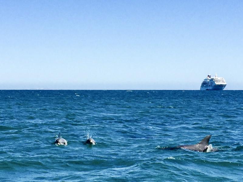 Die MS EUROPA vor Australien. Besuch von Kangaroo Island und Adelaide.