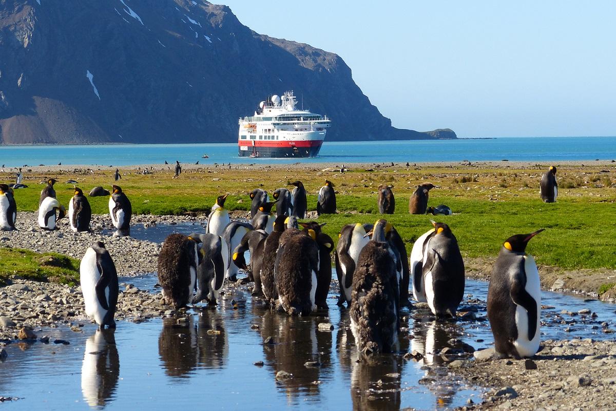 """Zu Besuch bei den Pinguinen: Die """"Fram"""" fährt unter anderem in die Antarktis.  Foto: Hurtigruten (dpa)"""
