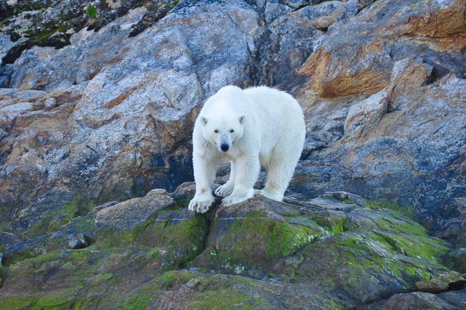 arktis-tagebuch-teil-i