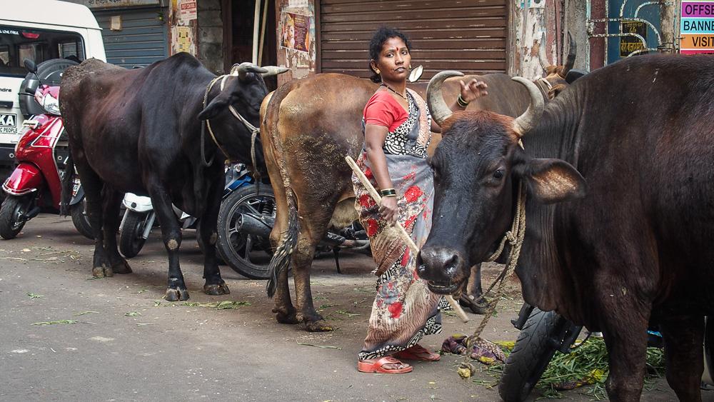 Peggy Günther unterwegs auf der COSTA NEO CLASSICA von Costa Kreuzfahrten vor Indien.
