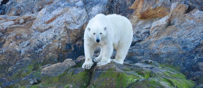 Eisberge, Zodiacs, Eisbären. Ellis Video-Tagebuch aus der Arktis, Teil 1