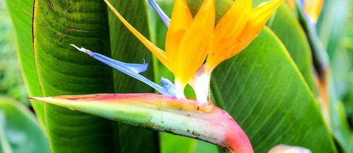 Kreuzfahrt-Highlight Funchal: Top-Tipps für die kleine Großstadt auf der Blumen-Insel
