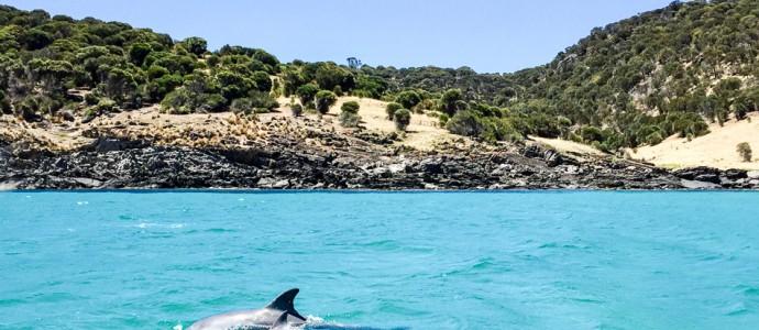 Downunder, deluxe. Teil 2: mit MS EUROPA von Melbourne nach Kangaroo Island